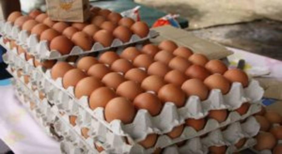 Resultado de imagen para cartón de huevos