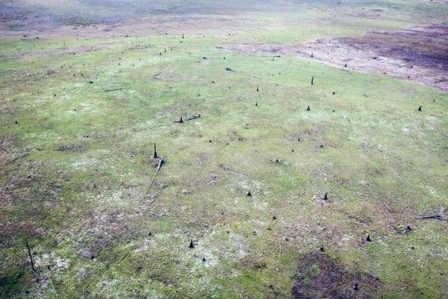 Suelos sedimentarios por la deforestación en la Gran Sabana