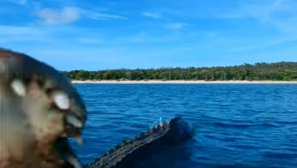 Impactantes imágenes de un cocodrilo atacando a un dron en pleno vuelo