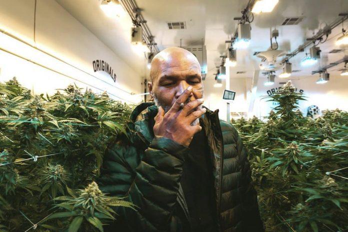 mike-tyson-gana-medio-millón-de-dólares-al-mes-con-el-cannabis