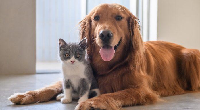 Mascotas detergente
