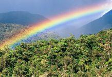 FAO urge salvaguardar la biodiversidad de los bosques