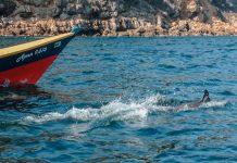 Delfines en Mochima
