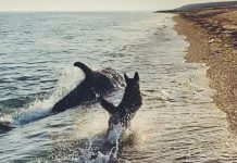 Así fue como un perro y un delfín se divirtieron en la orilla de la playa
