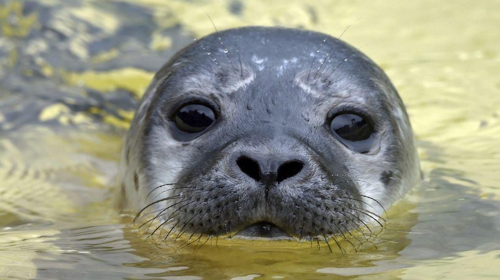 Golpearon a una foca hasta dejarla inconsciente para fotografiarse con ella