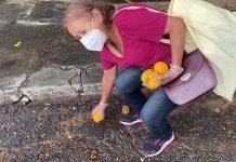 Mangos en el hambre de los venezolanos