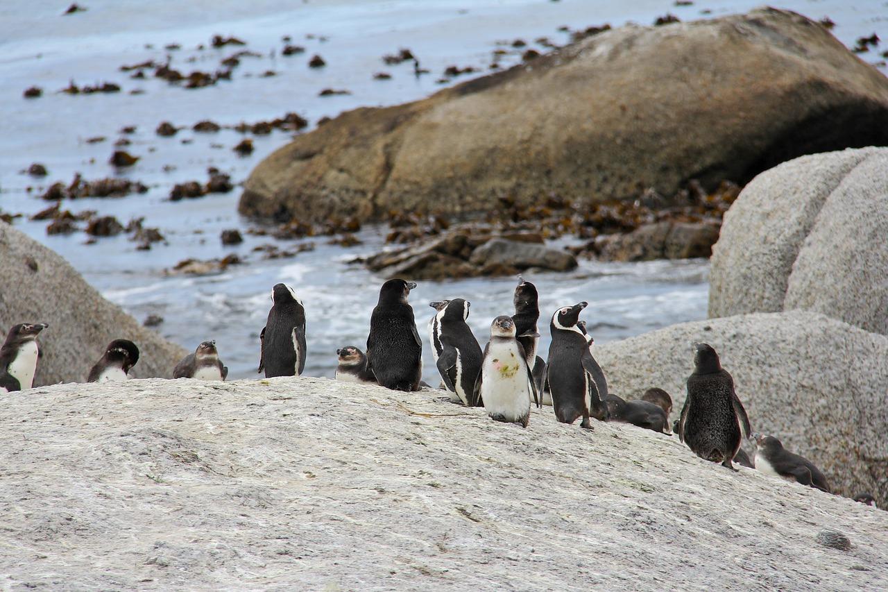 El 2020 sigue sorprendiendo ¿Pingüinos en la península de Paraguaná? (video) 3