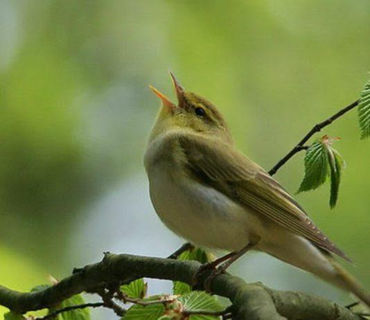 pájaros confinamiento